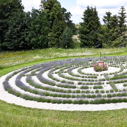 Levandulovy-labyrint-5